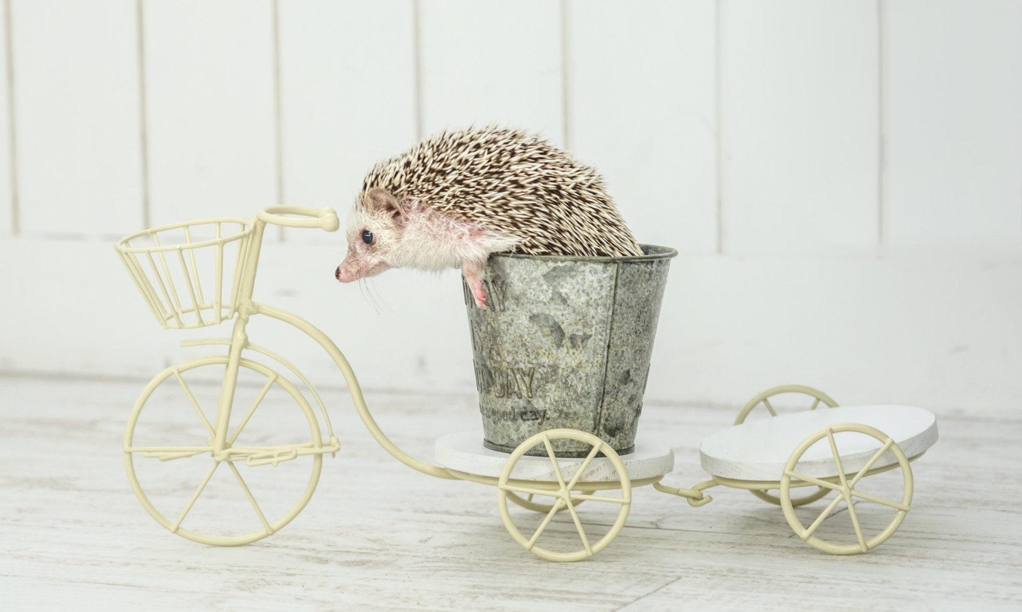 乗りやすい自転車はこれだ
